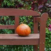 Pumpkin On The Bench