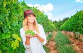 Happy woman on the vineyard, picking fresh ripe grape bunches, tasty sweet fruits, autumn harvest season, wine making concept