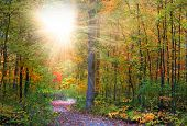 Walking trail in autumn time with sun rays