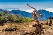 Old dry tree on volcanic mountains landscape