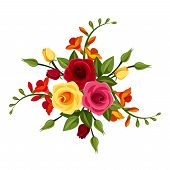 Red and yellow roses and freesia flowers. Vector illustration.