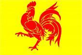 Walloon Rooster of Belgium
