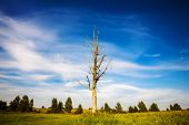 image of dead plant  - Landscape with a lone dead tree in a field - JPG