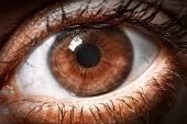 Brown human eye extreme macro shot.