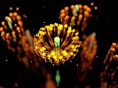 Yellow Glowing Flower Fractal