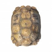 image of turtle shell  - Tortoise shell brown color from giant turtle on white background closeup - JPG