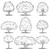Set of deciduous trees. Line art