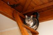 cat on the wooden stairs to the attic