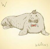 pic of blubber  - Sketch fancy walrus in vintage style vector - JPG