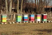 pic of bee-hive  - Bee Hive boxes - JPG