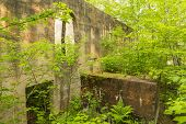 image of house woods  - Ruins of a quarry power house in the woods - JPG