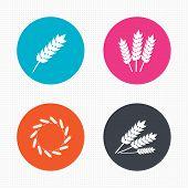 image of corn stalk  - Circle buttons - JPG