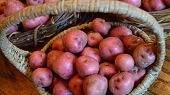 picture of solanum tuberosum  - Baskets full of fresh new potatoes locally grown in Florida - JPG