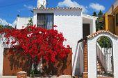 foto of urbanisation  - Villa covered with bougainvillea Urbanisation Calypso Costa del Sol Malaga Province Andalucia Spain Western Europe - JPG