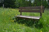 pic of meadows  - On the meadow - JPG