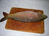 foto of fish pond  - River fish with scales caught in the river - JPG