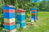 pic of bee-hive  - bee hives in yard provide home for bees pollinating plants and providing honey - JPG