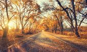 Постер, плакат: Autumn Forest Forest With Country Road At Sunset