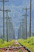 stock photo of train track  - traintracks heading off into the summer in the fraser valley - JPG