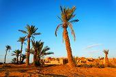 Sahara Desert Landscape