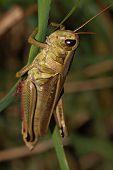 Grasshopper9