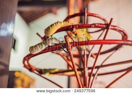 Snake On Branch In Snake