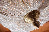 Vintage Crystal And Bronze Chandelier