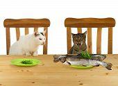 Zwei Katzen, die am Tisch sitzen