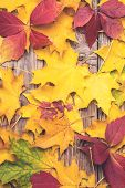 Autumn Background. Abstract Background Of Colorful Autumn Leaves. Fallen Leaves Over Rustic Wooden B poster