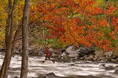 Autumn Pigeon River