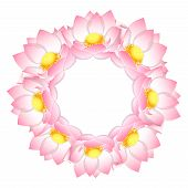 Pink Indian Lotus Wreath. (nelumbo Nucifera,sacred Lotus, Bean Of India, Egyptian Bean. National Flo poster