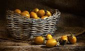 Yellow Datterin Cherry Tomatoes. poster