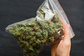 Package Cannabis In Hand .a Lot Of Marijuana Package With Weed And Fresh Buds Of Cannabis Many Weed. poster