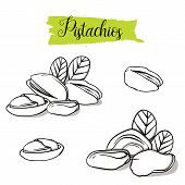 Hand Drawn Sketch Style Pistachios Set. Single, Group Seeds, Pistachio In Nutshells Group. Organic N poster