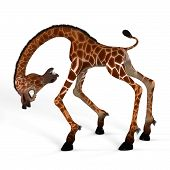 Schattig Giraffe met een grappig gezicht