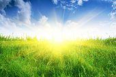 Campo verde e sol.