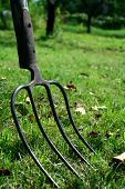 Garden fork in autumn garden lying on grass with leaves