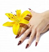 female fingers with red nails and yellow lily and on white background