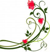 stock photo of rose flower  - Rose design - JPG