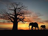 Family Of Elephant