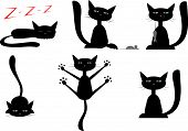 picture of black cat  - vector set of pictures with black cats - JPG