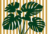 Monstera Deliciosa Floral Background