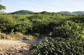 Monkey Apple Green Farm Hill