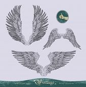 wings vector set for decoration and design