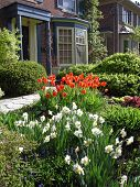 House With Spring Flowers
