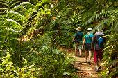 Group Of Trekkers Hike Through Green Jungle In Sri Lanka