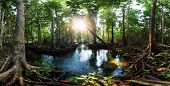 stock photo of swamps  - Mangrove trees in a peat swamp forest and a river with clear water - JPG