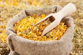 foto of marigold  - bag of healing herbs (marigold calendula) and wooden scoop herbal medicine