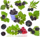 collection set of Blackberry dewberry close up isolation on white background