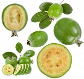 collection set of Feijoa (Acca sellowiana) - Pineapple Guava isolated on white background